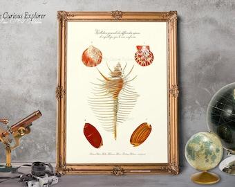 Shell Illustration, Sea Shell Art Poster, Beach Art Decor, Sea Seashell Posters, Home Seashell Art, Color Shells Poster - E5g24