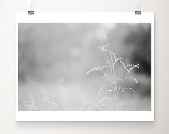 black and white photography nature photography grass photograph morning dew photo nature print botanical print country landscape