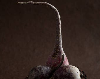 Beet (Food Photography Fine Art)