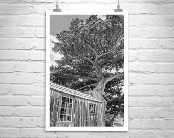 Monterey Cypress Tree Art, Monterey Peninsula Art, Carmel by the Sea, Point Lobos Art, Black and White Carmel Picture, Whalers Cabin Photo