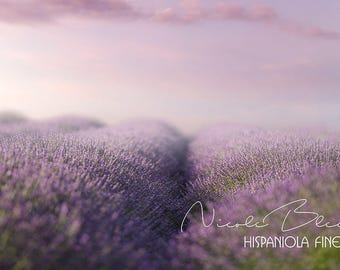 Lavender Field with pink Clouds, Flower Backdrop, Digital Download,  Photography, Photo Manipulation, Photoshop, Composite, Premade Backdrop