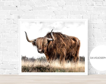 Highland Cow Print, Farm Animal Wall Art, Nursery Decor, Cattle Photography, Animal Photography, Digital Download, Scottish Cow Print