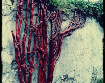 Sculpture lierre, ivy sculpture, sculpture bois, wood carving,  sculpture murale, wall sculpture, sculpture roots, design vegetal, green