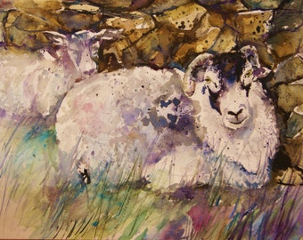 Sheep painting - original watercolor swaledale  /herdwick sheep