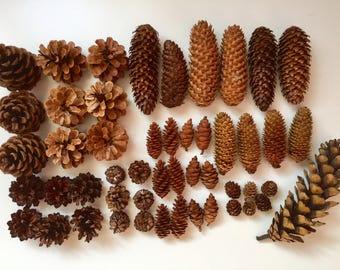 Set of 50 Natural Ornaments- Pine Cones- Acorns- Dry Oranges - Christmas Tree Ornaments- Natural Decorations- Gold Pine Cones- Home Indoor