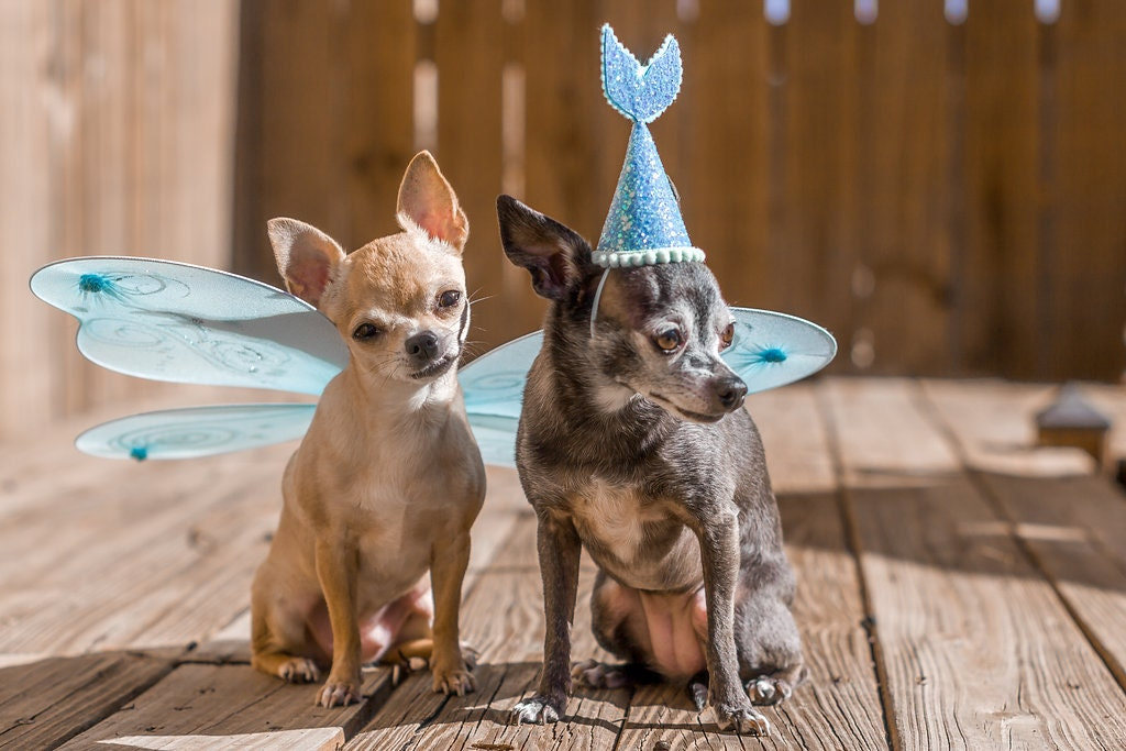 Excellent Dog Birthday || Dog Party Hat || Dog Birthday Party Hat || Pet  TP88