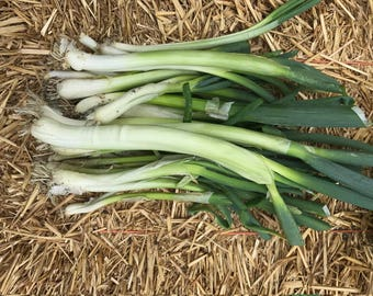 ONION SEED, Bunching - Evergreen Hearty
