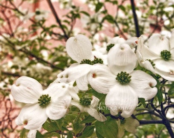 Dogwood Flowers Photography-Pink-Green-White-Nature-Botanical Print-Floral Photography-Horizontal Print-16x24-Cottage Chic Wall Art