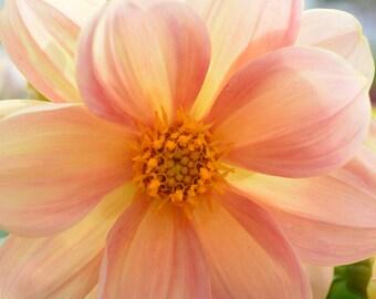 Orange Flower Canvas Print #980