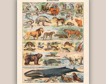 Mammal print, educational poster, natural science, bear, lion, whale, monhey  kids room decor natural history  school decor  11x14
