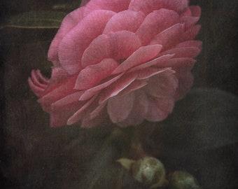 The Rose - Photo Art