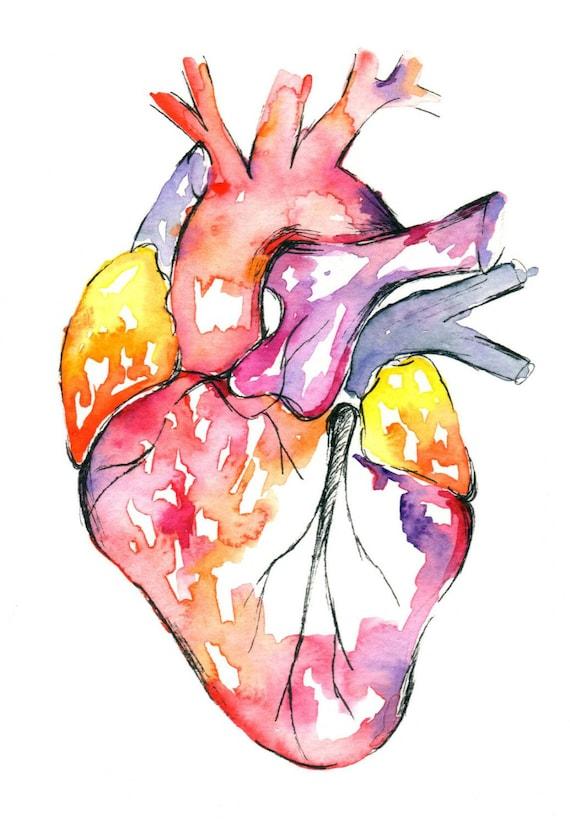 Perfecto Corazón Anatomía Arte Modelo - Anatomía de Las Imágenesdel ...
