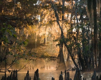 Louisiana Cypress Swamp Morning Light