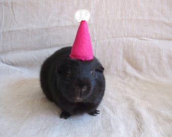Guinea Pig Party Hats