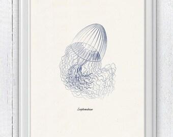 Christmas gift Jellyfish Leptomedusae 3 in blue - sea life print- Wall decor poster  Marine  sea life illustration A4 print SAS133