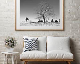 "Landscape Photography, Large Wall Art Print, Nature Photography, Fine Art Print, Black and White, ""Barren Battlefield"""