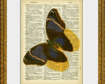 BUTTERFLY BEAUTY recycled book page art print - an upcycled antique dictionary page with retooled antique bird illustration - home decor