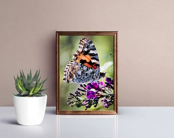 Butterfly decor, butterfly wall art, butterfly nursery print, nursery decor, baby girl room, butterfly picture, nature photography, colorful