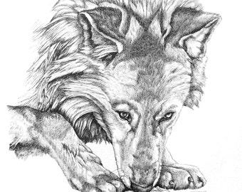 Shasta Wolf Portrait Screen Print