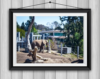 San Diego Zoo Photoset (Proceeds Donated)