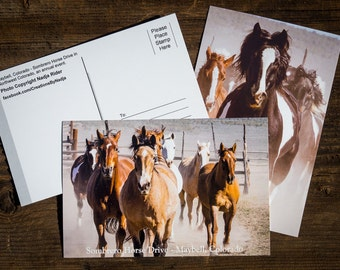 Horse Postcards - Sombrero Great American Horse Drive in Northwest Colorado - Set of Six