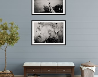 Large Wall Art - set of 2 photographs - elephant - giraffe - nursery art - animal photography