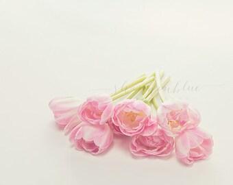 tulip still life photography / botanical, pink, flower, wedding bouquet, lime green, spring/ tulip study no. 3 / 8x10 fine art photograph