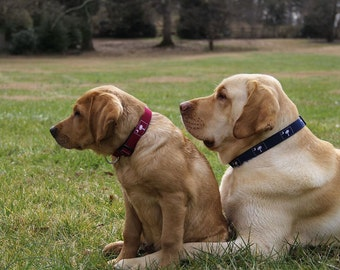 SC Palmetto Dog Collars in Many Colors