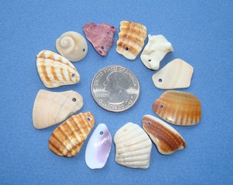 Sea shell Charms M-Pierced shells-Craft/Jewelry Supplies-12 Top drilled sea shell charms-Sea shell beads-Handmade in Italy
