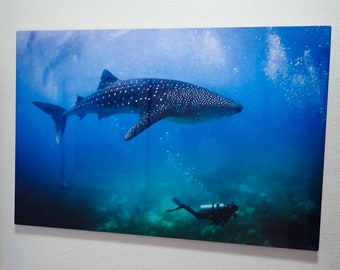 16x24 Metal prints Underwater photos, ready to hang
