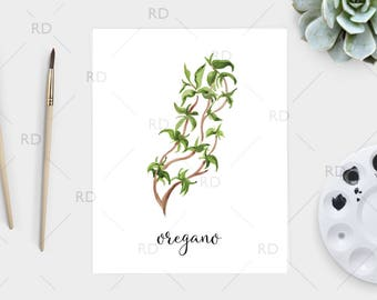 Oregano watercolor - PRINTABLE Wall Art / Oregano print / Herb printable / Herb print / Herb art / Oregano Art / Kitchen art / Kitchen