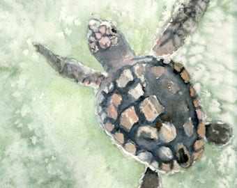 Sea turtle art watercolor giclee print, 8x10 inches in white 11x14 matte, on Hahnemuhle Museum Etching Fine Art Paper