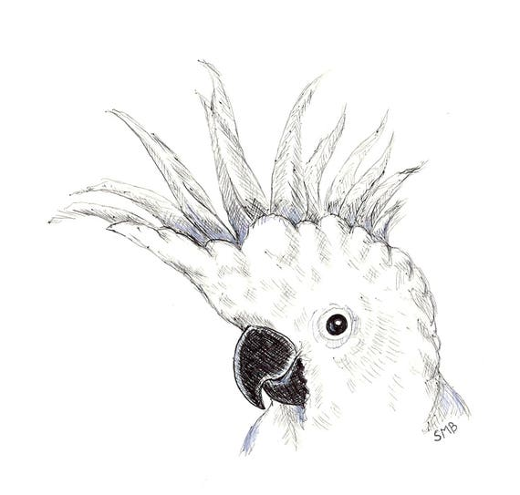 Sally Blanchard Original Pen and Ink Drawing of a Sulfur-crested Cockatoo