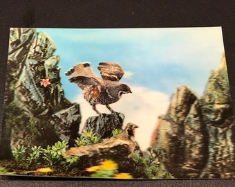 1960's lenticular bird on a rockL scene post card with nice vibrant colors