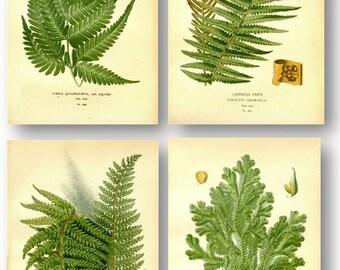 Green Fern Leaves Antique Botanical Illustration Plates Set of 4 Art Prints Pale Yellow Background