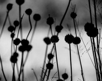 Monochrome Wall Art - Black and White Home Decor - Abstract Nature Artwork - Fine Art Nature Photography