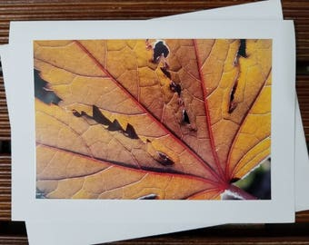 Autumn leaf greeting card, blank card, nature photography