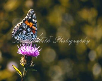 Cliffwalk Butterfly II-- Newport, RI