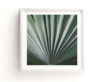 minimalist decor, palm tree frond photograph, green wall art, palm tree print, plant photo, tropical photography, nature, botanical art