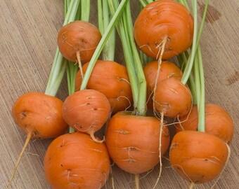 Parisian Round Carrot ( 100 thru 1/4 LB seeds) Paris Market French non-gmo   #33
