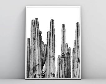 Cactus Print, Black & White, Cactus Photography, Desert Wall Art, Monochrome Photo, Botanical Poster, Succulent, Printable, Digital Download