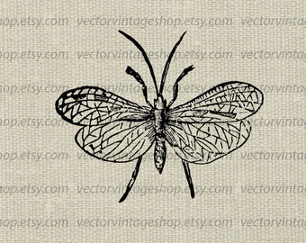 Insect Clipart Vector Graphic, Caddisfly Large Winged Clip Art, Victorian Illustration Instant Download WEB1715AH