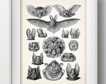 Bats Collage by Haeckel - MA-02 - Fine art print of a vintage natural history antique illustration - 8x10 11x14 12x18 13x19