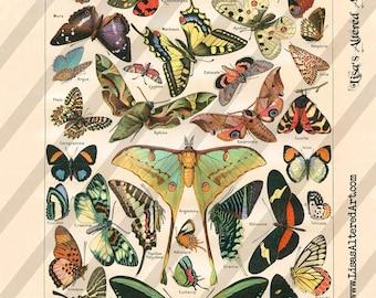 Digital Collage Sheet Vintage Papillon Images Butterflies (Sheet no. O27) Instant Download