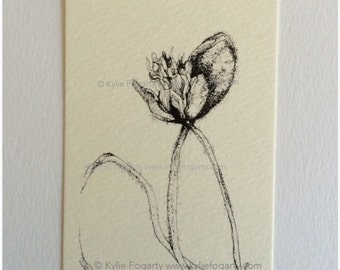 Black and White Poppy Pod Drawing - ACEO - Poppy Study 4 -  Fine Art Print - Botanical Aceo - Miniature Artwork