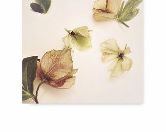 Flower Photography, Flower Photo, flower decor, flower print, modern art, nature print, fine art photography, still life, wall decor