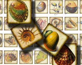 Beautiful Shells (1) Digital Collage Sheet - 56 Squares 1x1 or smaller available for magnet, resin pendant, glass and scrabble tile