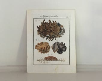 1777 ANTIQUE SHELL ENGRAVING original antique sea ocean marine beach print