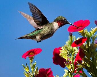 Photography Print, Hummingbird Photo, Nature Photography, Hummingbird Picture, Wall Art, Hummingbirds, Floral Bird Art, Country Decor