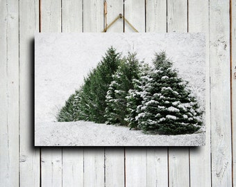 Winter Pines - Winter Photography - Nature Photography - Christmas Tree Photography - Winter art - Winter decor - Christmas decor